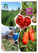 2015 factory price new wolfberry certified organic goji berry dried goji berry,goji berries 250/280/350/380/500/750
