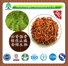 GMP factory supply Natural herb Fortunes Drynaria Rhizome Extract