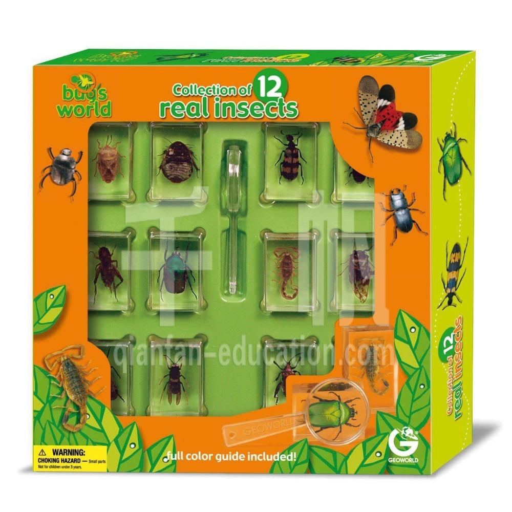 Bug world 1