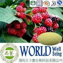 Hot sale Raspberry extract/Raspberry ketone 99%/Raspberry powder/Good cardiovascular plant extract