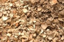 coconut shell crushed
