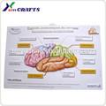 2014 Póster impreso grande, póster de diseño educacional, fabricante chino
