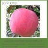 Red Mature Wholesale Apple Fruit Price