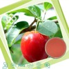 100% Natural Water Soluble Acerola Cherry Fruit Powder