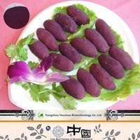 GMP Supplier Anthocyanidins Series purple sweet potato extract powder