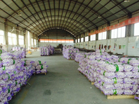 cold store fresh garlic price in china 2015