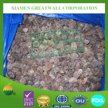 Chinese frozen fresh truffles with best price