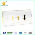 real incrustado biológica especímenes de insectos