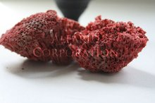 Natural Sea Corals Red from Socotra Island