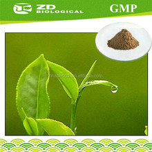 100% organic green tea extract (NON GMO green tea extract powder)