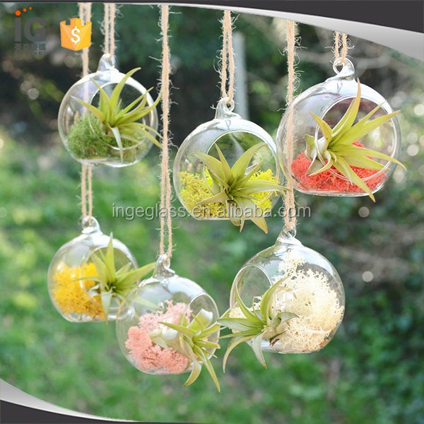Hanging Glass Vase Air Plant Terrarium For Home Decor Buy Glass