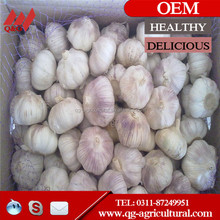 Normal White Garlic 5.5cm Nature Garlic with good price