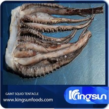 Frozen Giant Squid Tentacle
