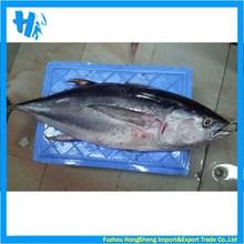 2015 hot sale whole yellowfin tuna frozen