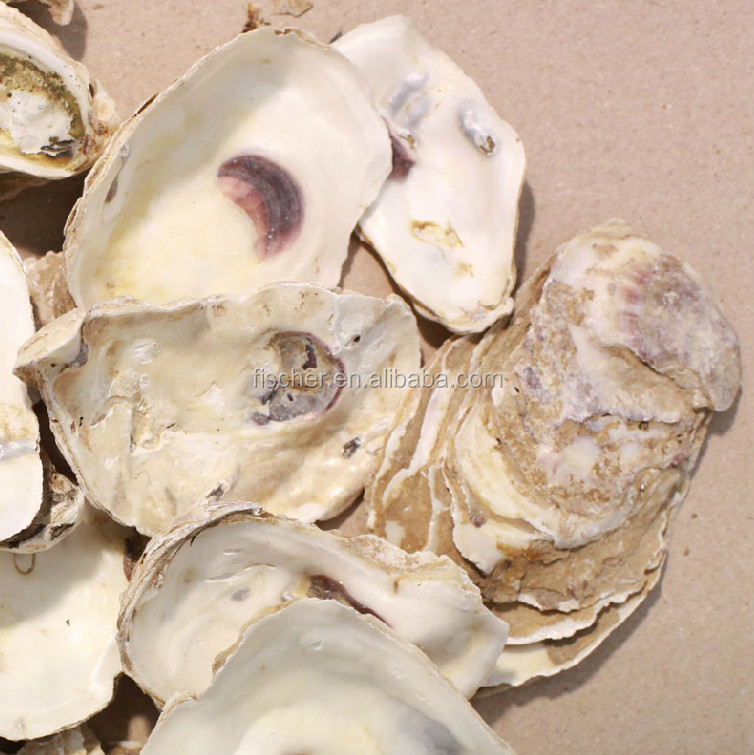 Oyster Shells For Sell Filter Media Oyster Shells