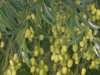 100% natural pure neem oil