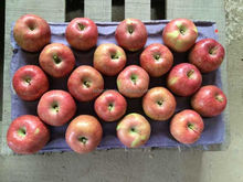 20kg red star apple 100/113/125 Trade Assurance