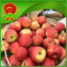 Golden Apple factory supply best quality low price apple