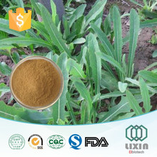 alibaba suggested manufacturer whiteflower patrinia herb extract powder, Patrinia Herb extract