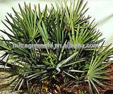 USD13.5/KG,saw palmetto berry extract , Saw Palmetto P.E.