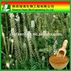 High Quality Triterpenoid Saponis 2.5%,5%,8% /triterpenoides Saponis/High Quality Gotu Kola Extract