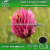 Pure Red Clover Extract,Red Clover Extract Powder,Red Clover P.E.(4:1~20:1)
