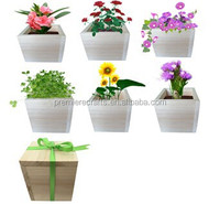 Decorative Indoor Herb Handmade Wooden Garden Flower Pot Planter Kit With Ribbon 10*10*10cm