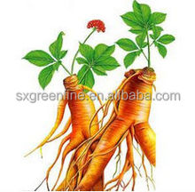 High Quality Panax Ginseng Root Extract fine powder