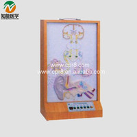 Auditory conduction electric model BIX-A1075