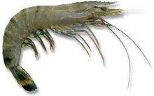 Shrimp/Prawn/Crayfish