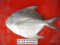 frozen silver pomfret frozen seafood