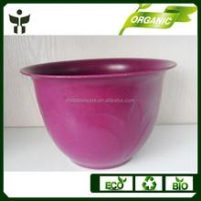 colorful succulent plants plastic flowerpot seeding pot gardener