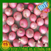 /product-gs/chinese-onion-red-onion-fresh-onion-60180646656.html