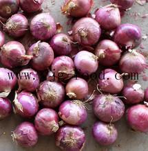 fresh hot sale onions