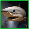 Fiberglass Simulation Model amusement equipment flying shark