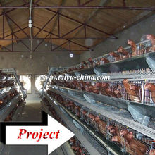 Taiyu design layer chicken cages for hen farm (full poultry equipment and own oversea agent)