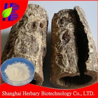 Manufacturer Supply Magnolia Extract