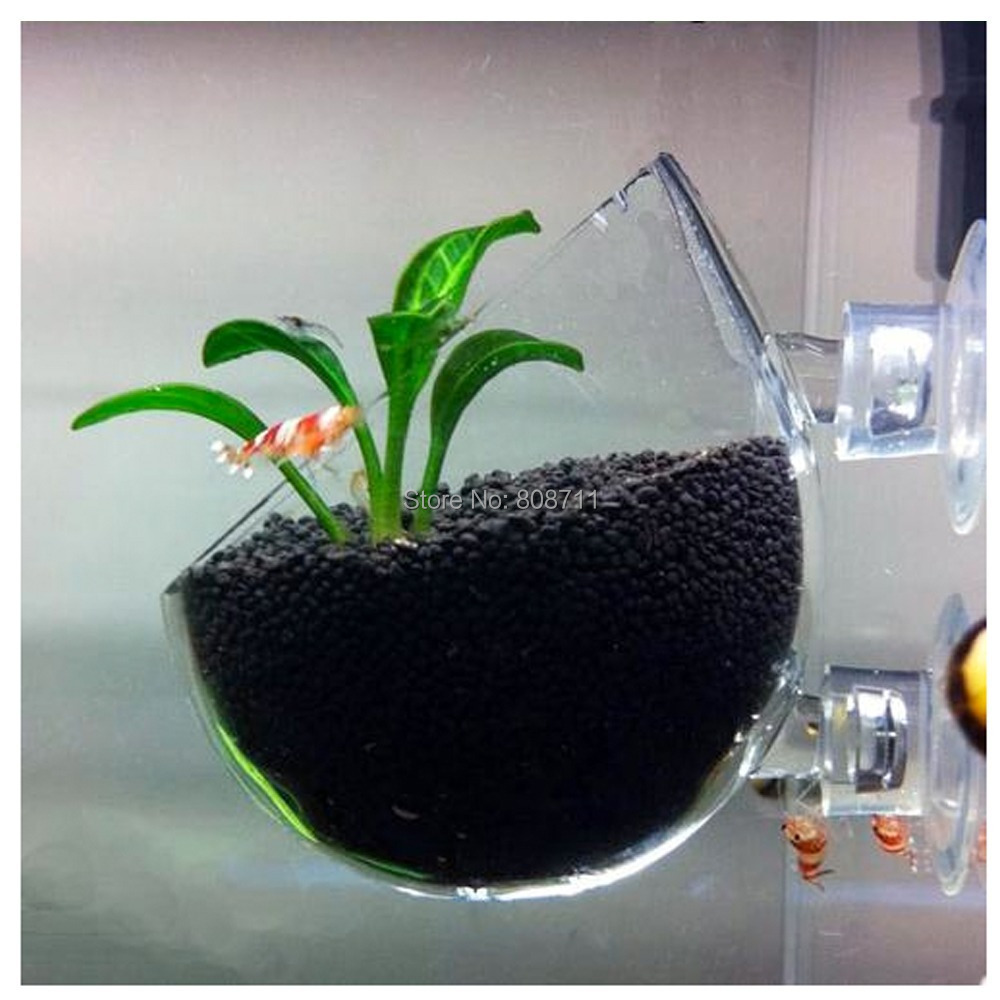 Fish tank wall mounted plant cup live plants glass pot for Plant fish tank