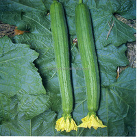Si gua zhong zi 99% high purity for Luffa Seeds with Mini Vegetable Seeds