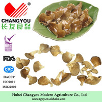 Dried Oyster Mushrooms Best Price For Buyers From China
