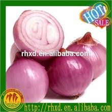 Good quality new crop fresh shallot/onion