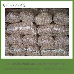 China Garlic Planter Natural Wholesale Garlic Price