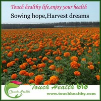 Touchhealthy supply 3 species 6 kinds of marigold seeds for sales,the biggest supplier marigolds seeeds In China