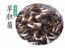 yunnan salvaje fresca setas morel mejor precio