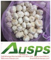 china cheap garlic price
