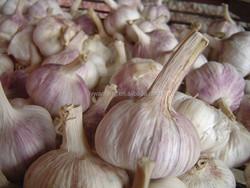 Jinxiang Fresh Garlic Price Natural Garlic for Export