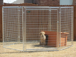 Large welded metal dog kennel galvanized cover dog run kennels