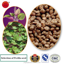 perilla seeds for sale/aromatic 100% high quality perilla seeds