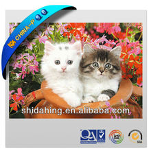 Super Cute Family Cat High-Definition 3D printing lenticular picture