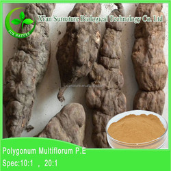 2015 natural high quality pure polygonum multiflorum root extract/ Polygonum multiflorum Thunb extract 4:1,10:1,20:1